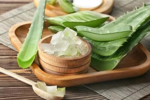 Aloe vera gel og stængler