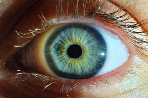Lys får normalt pupillen til at trække sig sammen