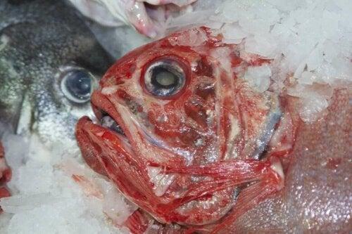 Nærbillede af frossen fisk