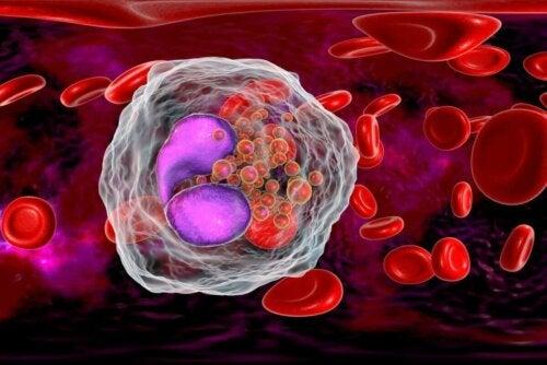 Animation af celle