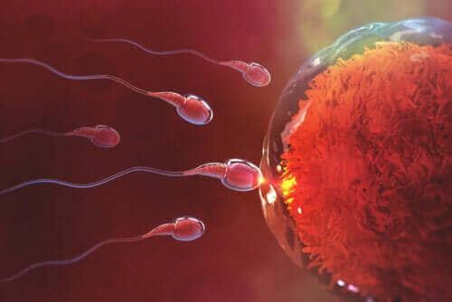 Hvor længe tager det at blive gravid efter sex?