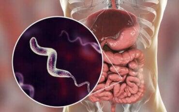 Karaktertræk for infektioner med campylobacter