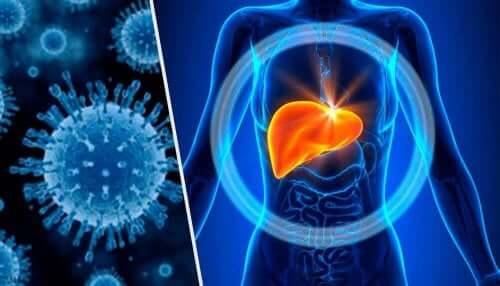 Illustration af leverbetændelse og levermetabolisme