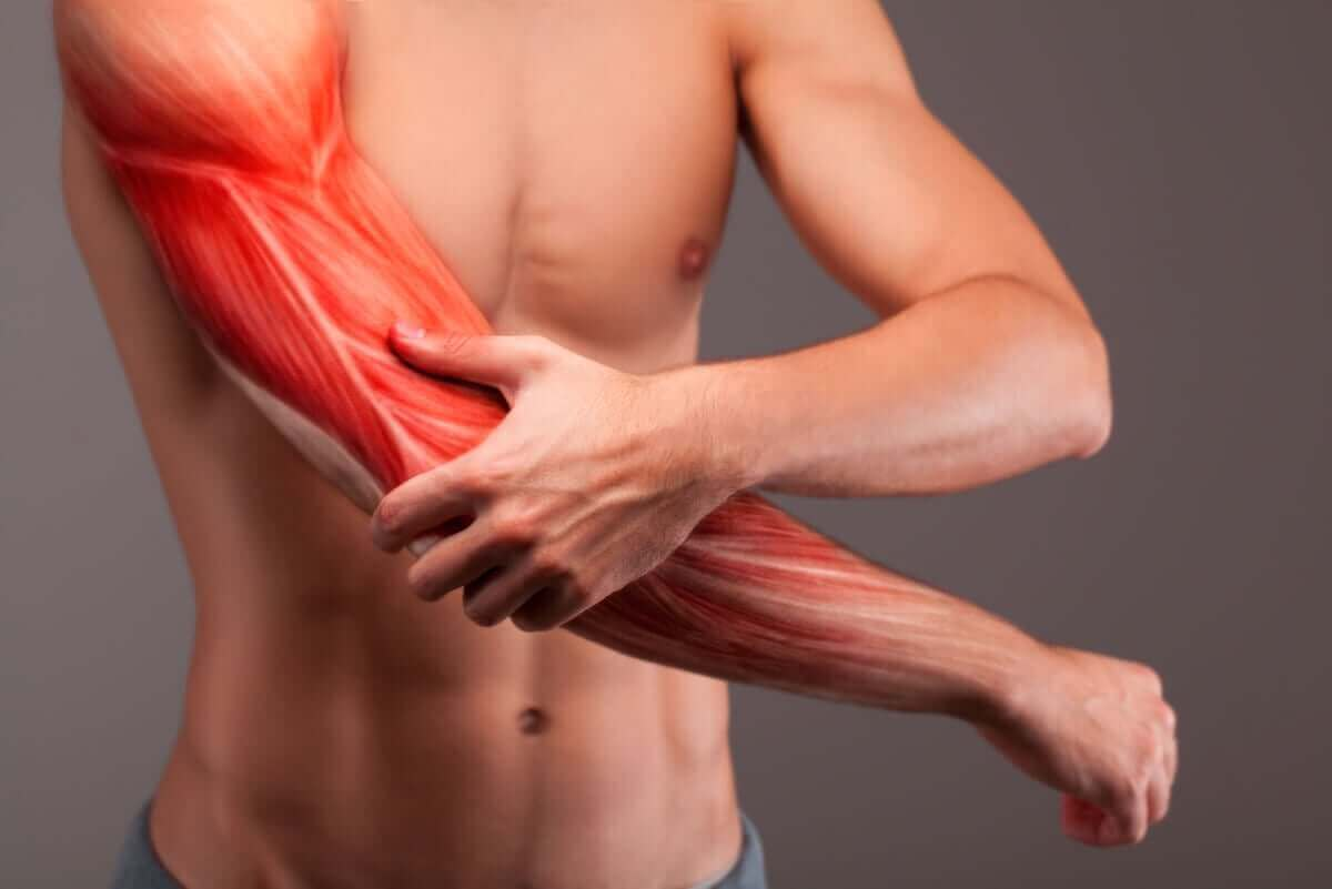 En af de vigtigste funktioner ved protein er dannelsen af muskelvæv, som kan ses her