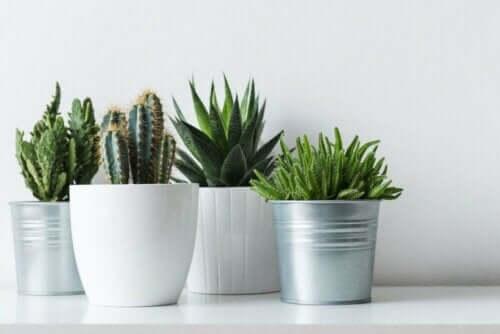 Forskellige robuste planter i potter