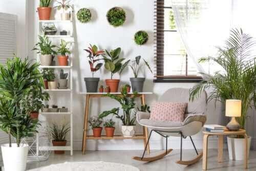 Robuste planter, der ikke kræver meget pleje