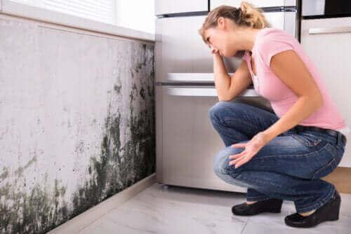 Kan skimmelsvamp i huset føre til sundhedsproblemer?