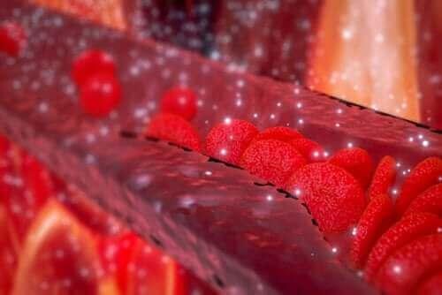 Animation af røde blodlegemer