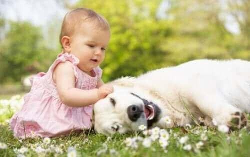 Baby med en hund på græsmark, da hun ikke er bange for dyr