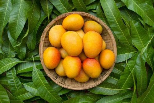 Nogle frugter kan forhindre vægttab, såsom disse mangoer i skål ovenpå blade