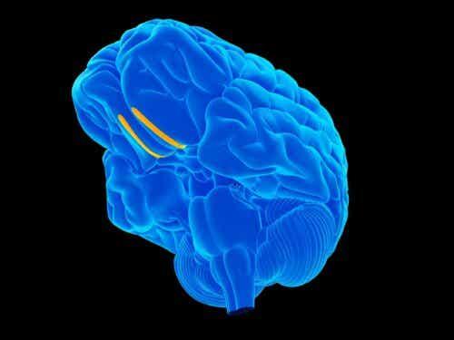 Blå hjerne med gule streger