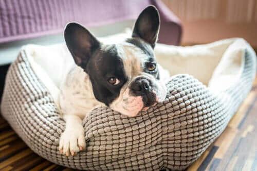 Opdag fem idéer til huse til kæledyr