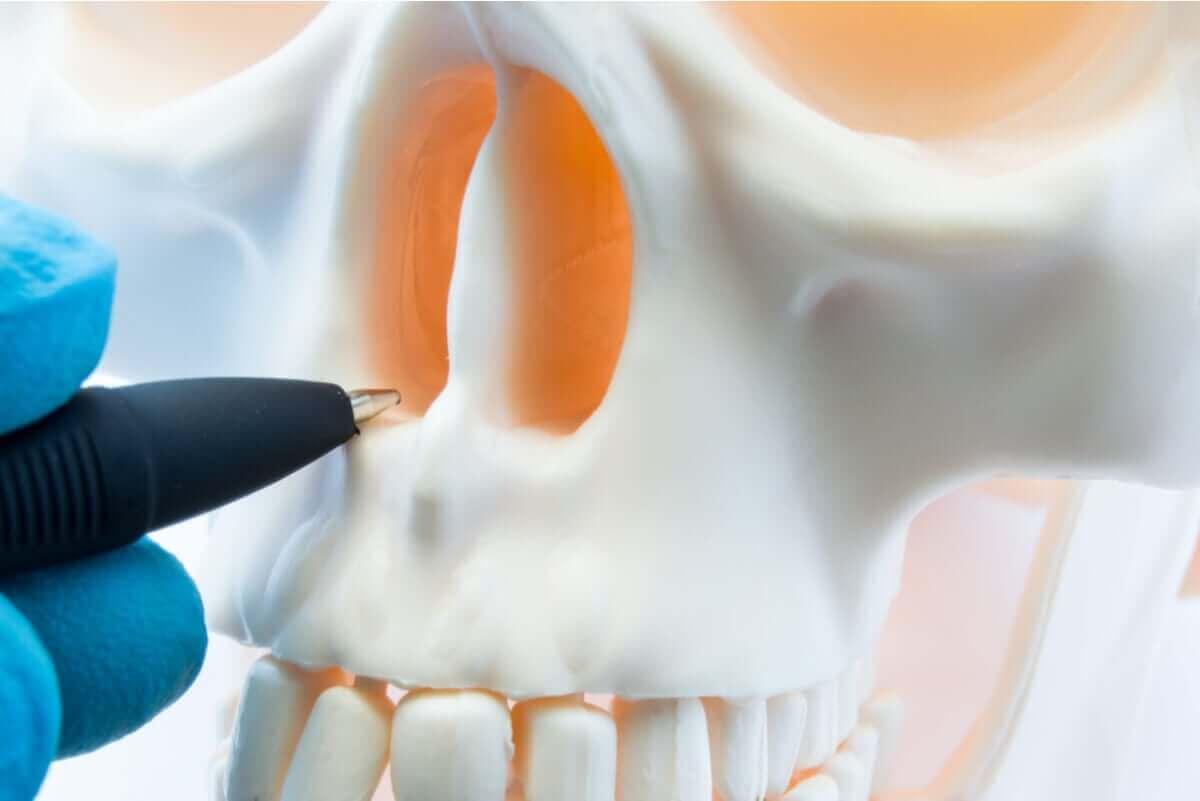 Kuglepen peger på næsebor i kranie