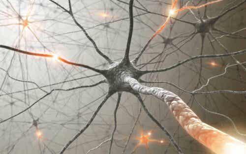Netværk af neuroner