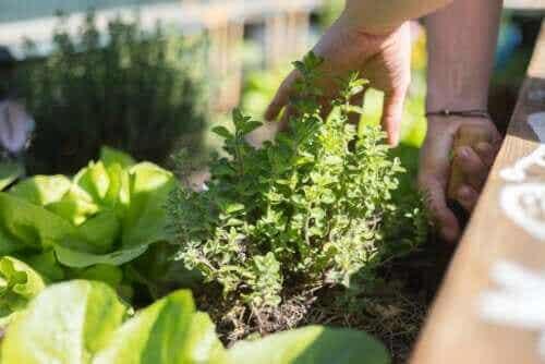 Opdag de bedste tips til en have på terrassen