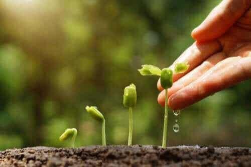 Læs om 6 tips til en bæredygtig have