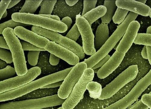 Fager til at bekæmpe antibiotikaresistens