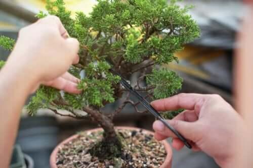Lær, hvordan man laver og plejer bonsaitræer