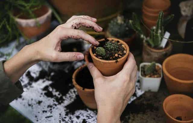Person planter levende sten