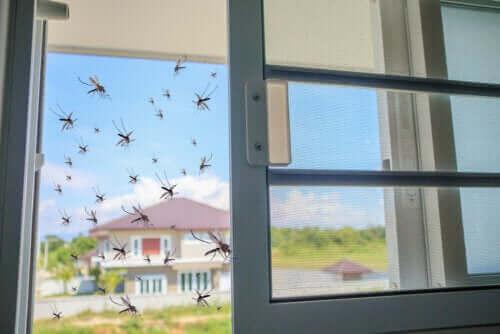 Basilikum som et naturligt middel mod myg