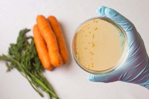 Hvad er fødevaresikkerhed?