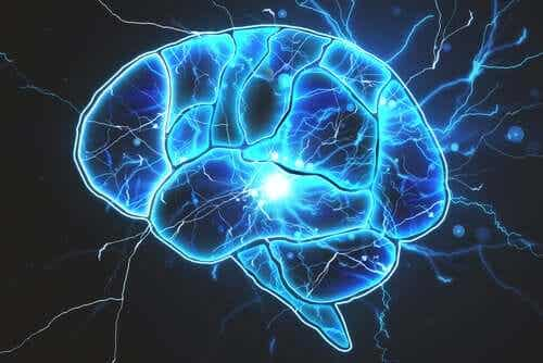 Er der bakterier i hjernen?