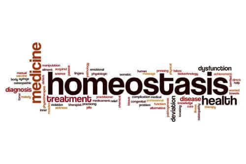 Hvad er begrebet homøostase?